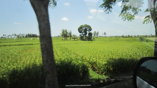 Nông thôn của đảo Bali