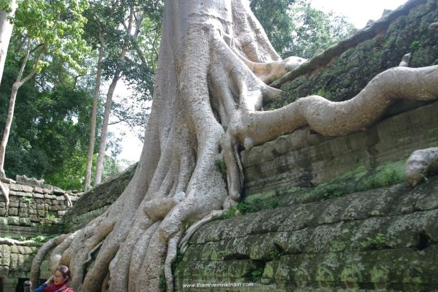 Khám phá đền Angjko Wat tại Siểm Riệp của Camphuchia