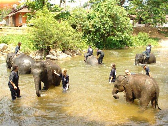 Khu bảo tồn voi Maetaeng