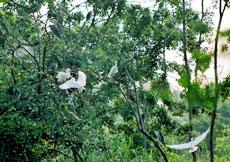 Vườn chim trong thành phố
