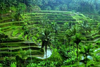 Làng Ubud - Indonesia