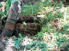 Xẻo Quýt - khu di tích lịch sử - sinh thái rừng tràm