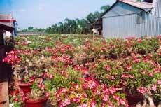 Vườn hoa Tân Quy Đông