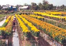 Làng hoa kiểng Sa Đéc