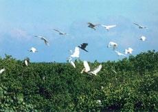 Khu bảo tồn thiên nhiên vườn chim Bạc Liêu