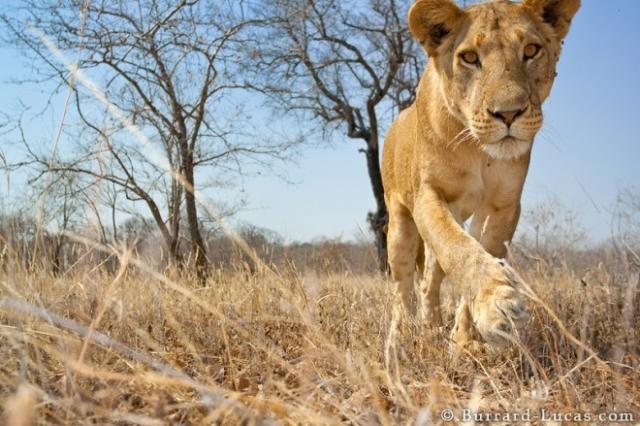 Du lịch Châu Phi - Du lịch Kenya/ 7 ngày